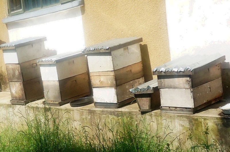 Bee hives arranged under the veranda