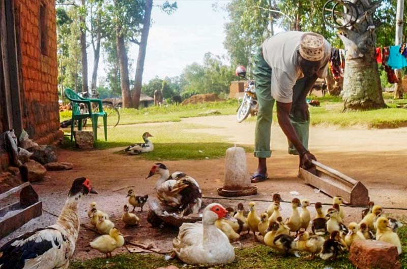 Mr Bashir feeds his ducks