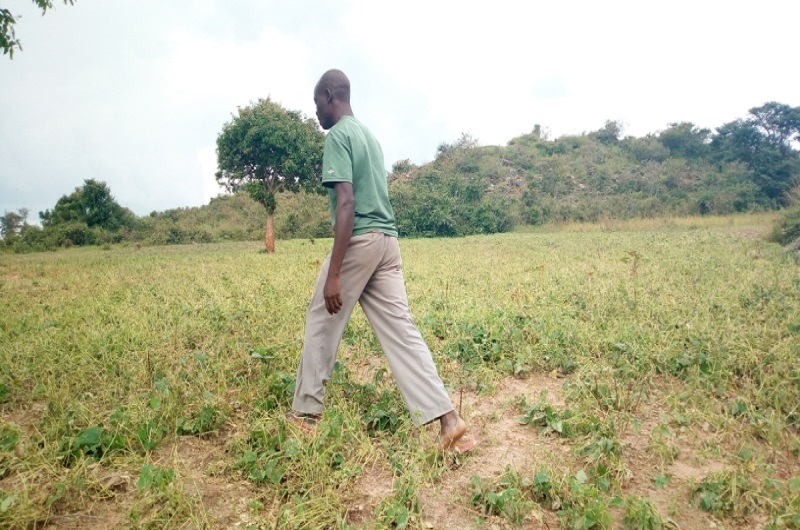 Mr Muzamil Abale walks in one of the destroyed beans field