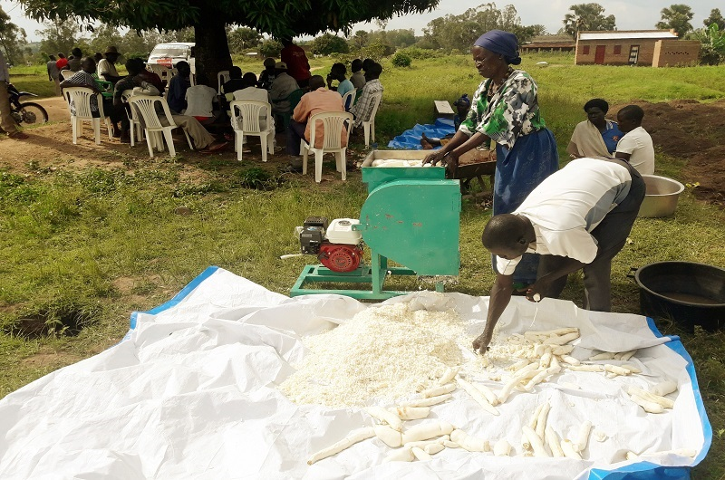 MAAIF approves establishment of cassava processing factories